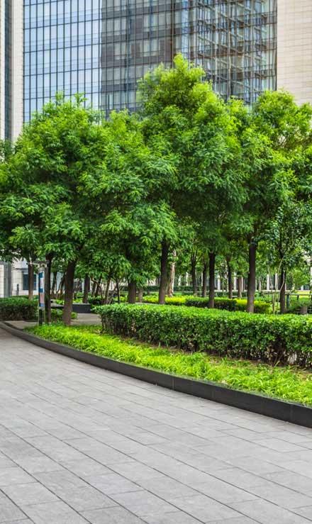 DeRoman Landscaping LLC Commercial  Maintenance