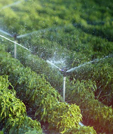 DeRoman Landscaping LLC Irrigation System Repair