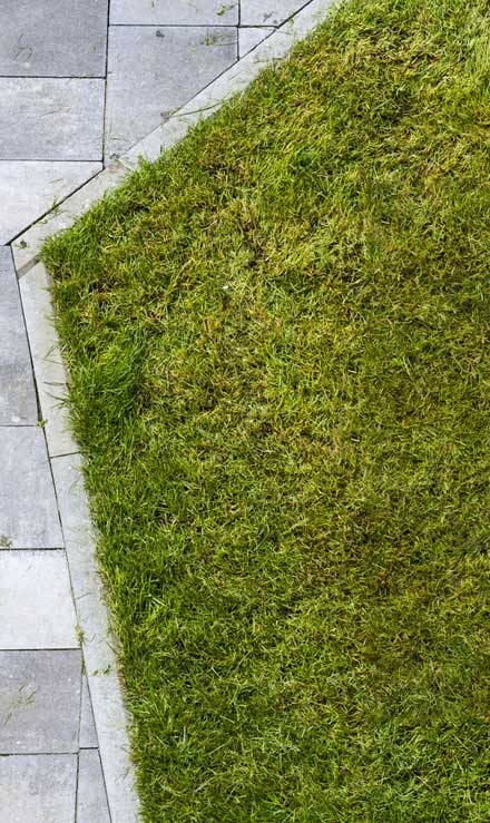 DeRoman Landscaping LLC Lawn Dethatching