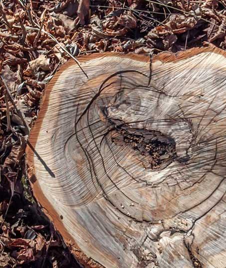 DeRoman Landscaping LLC Tree Removal