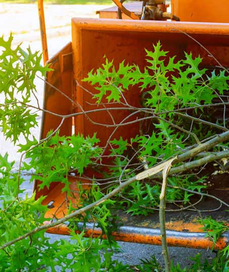 DeRoman Landscaping LLC Tree Trimming