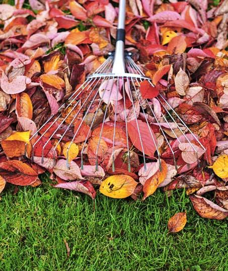DeRoman Landscaping LLC Fall Clean Up